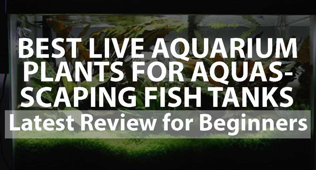 Best Live Aquarium Plants for Aquascaping Fish Tanks Latest Reviews for Beginners