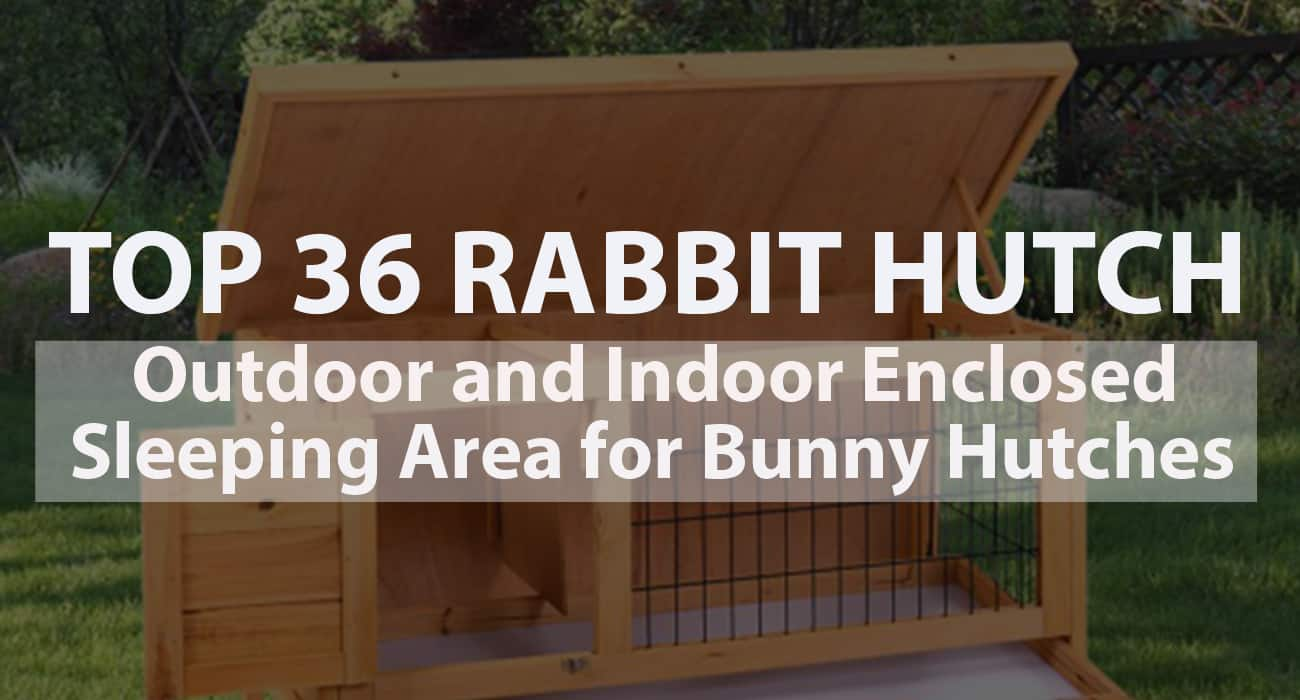 Top 36 Best Rabbit Hutch - Outdoor and Indoor Enclosed Sleeping Area for Bunny Hutches