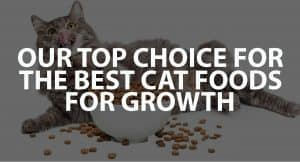 Our Top Healthy Choices for the Best Cat Foods for Growth
