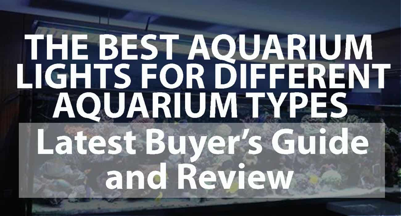The Best Aquarium Lights for Different Aquarium Types Latest Buyer's Guide and Reviews